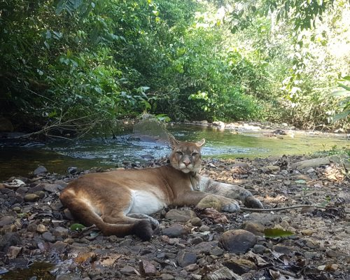 Sonko rests near a stream at Parque Jacj Cuisi